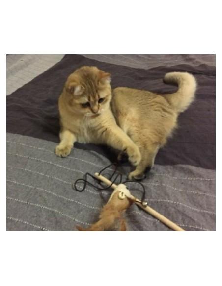 Cat catcher game