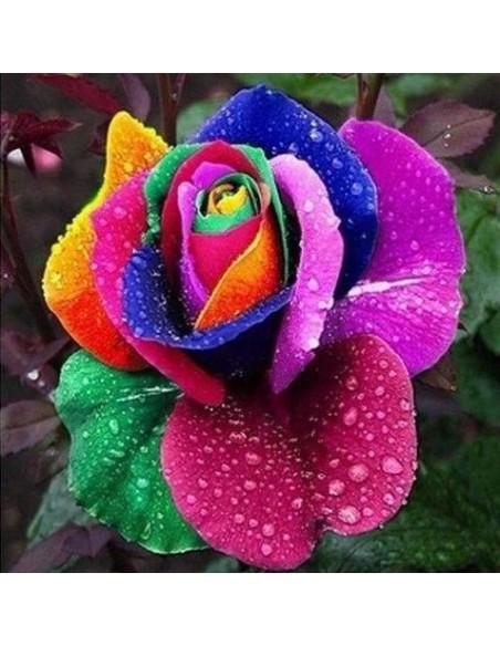 Rare Rainbow Rare Seeds