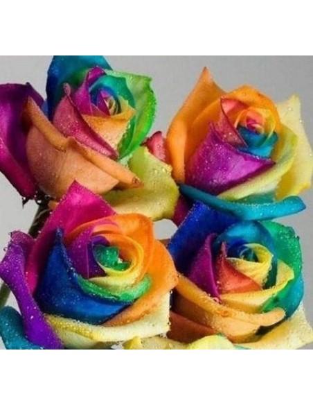 Graines de Roses Arc en Ciel Rare
