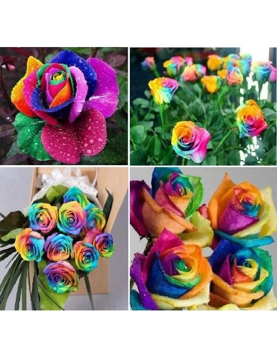 Raras semillas raras de arcoiris